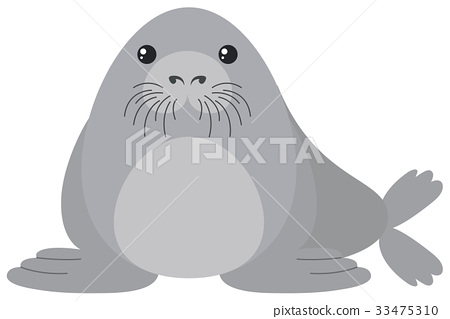 Cute seal on white background 33475310