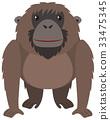 Brown orangutan with happy face 33475345