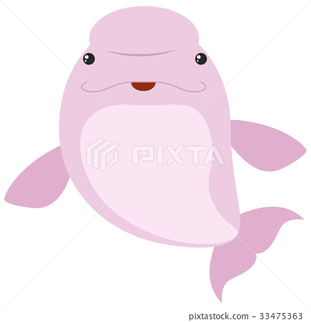 Pink beluga whale on white background 33475363