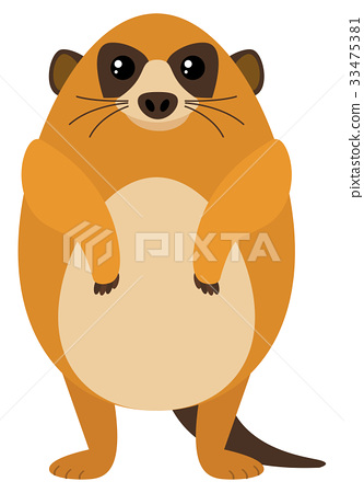 Meerkat on white background 33475381