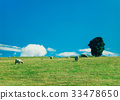 hill, meadow, grassland 33478650