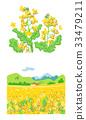 유채 꽃과 유채 꽃밭 33479211