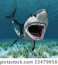 鯊魚 立體 透視 33479656