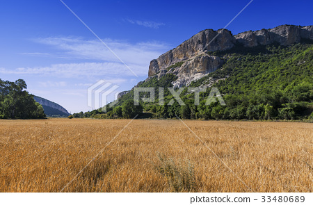 Field of wheat with mountainous backdrop 33480689