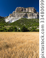 Field of wheat with mountainous backdrop 33480699