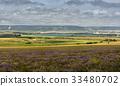 Lavender field in sunlight in the Crimea. 33480702