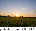 paddy field, rice field, sunset 33483020