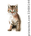 꿩 호랑이 고양이 33484144