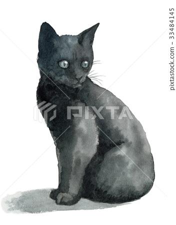 고양이, 아기 고양이, 새끼 고양이 33484145