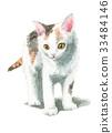 고양이, 아기 고양이, 새끼 고양이 33484146