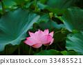 bloom, blossom, blossoms 33485521
