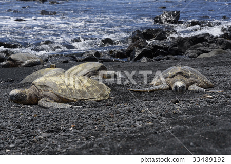 hawaiian islands, black sand beach, honu 33489192