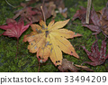 Moss and fallen leaves 33494209