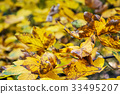 Close up photo of maple tree with yellow leaves 33495207