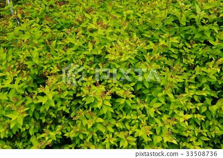 식물 33508736