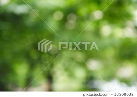 나뭇잎 33509038