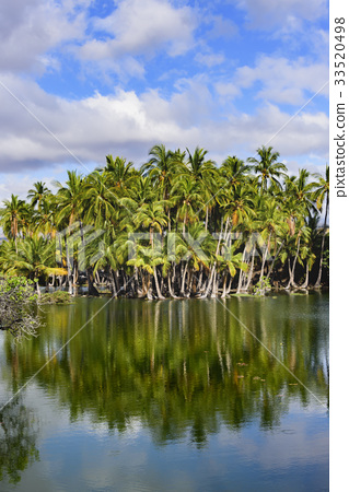 hawaii, hawaiian islands, palm trees 33520498