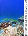 오키나와 바다 산호 33529059