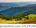 beech trees meadow on hillside in autumn 33529196