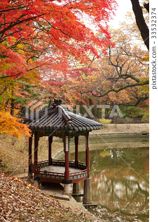 단풍,낙엽,관람정,창덕궁,종로구,서울 33532374
