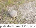 오래된 연식 야구 공 33536617