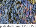Colors of Seaweed 33537353