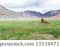 Marmot 33539471