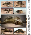Sea turtle laying eggs on the beach - collage 3d 33541980