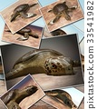 Sea turtle laying eggs on the beach - collage 3d 33541982
