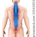 3D illustration of Spine, medical concept. 33542053