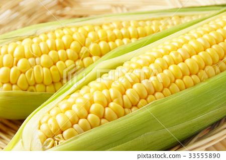 玉米 33555890