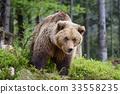 wildlife, forest, brown 33558235