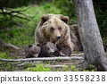 cub, brown, bear 33558238