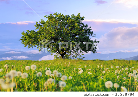 Summer landscape with nobody tree 33559794