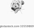 貴賓狗 貴賓 紅貴賓 33559869