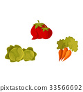 vegetable, vector, organic 33566692
