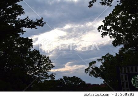도쿄 여름 우에노의 숲 33569892