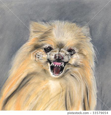 Angry Dog Pomeranian 33579054
