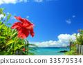 沖繩藍色的大海和藍天和紅芙蓉[2017年8月拍攝] 33579534