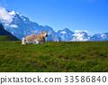 アルプス山脈 33586840