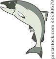 salmon, fish, fishes 33590679