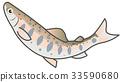 鉤吻鮭 西瑪 魚 33590680