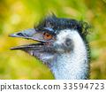 emu, bird, head 33594723