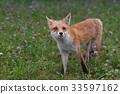 Kita狐狸的孩子们 33597162