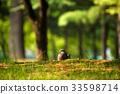 비둘기, 선택초점, 조류 33598714