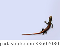 Little colorful lizards on the white background 33602080