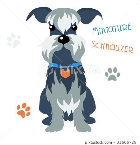 Miniature Schnauzer dog 33606729