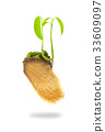Growing green plant 33609097
