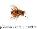 Fly on a white background 33610970