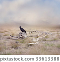 Vulture perches on Elephant Skeleton 33613388